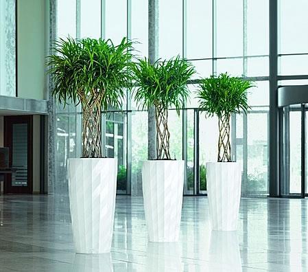 office plants - Office Plants